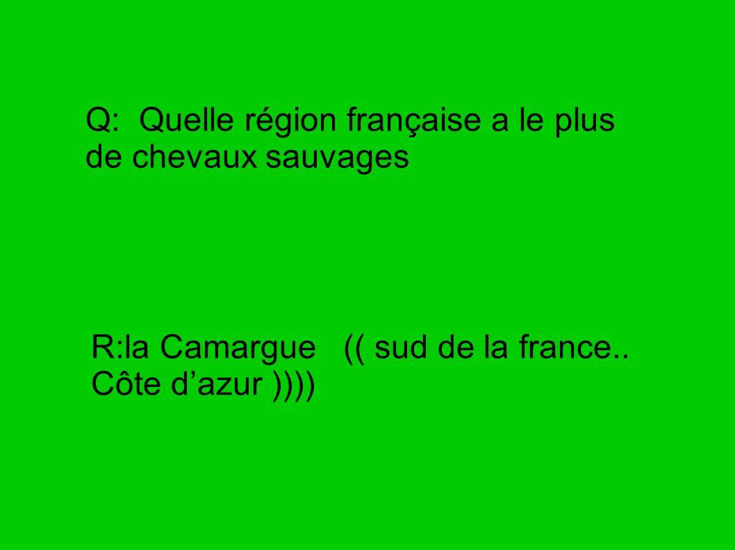 Q: Quelle région française a le plus de chevaux sauvages