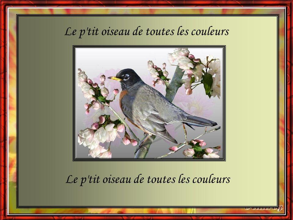 Le p tit oiseau de toutes les couleurs