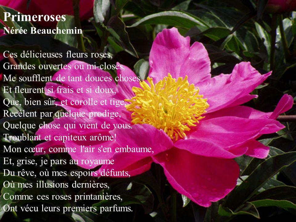 Primeroses Nérée Beauchemin Ces délicieuses fleurs roses, Grandes ouvertes ou mi-closes, Me soufflent de tant douces choses Et fleurent si frais et si doux, Que, bien sûr, et corolle et tige, Recèlent par quelque prodige, Quelque chose qui vient de vous.