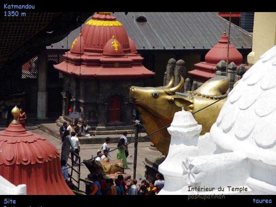 Katmandou 1350 m Intérieur du Temple pashupatinah Site Pashupatinath taureau