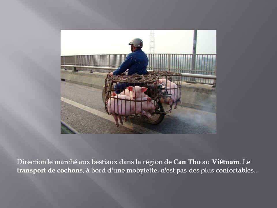 Direction le marché aux bestiaux dans la région de Can Tho au Viêtnam