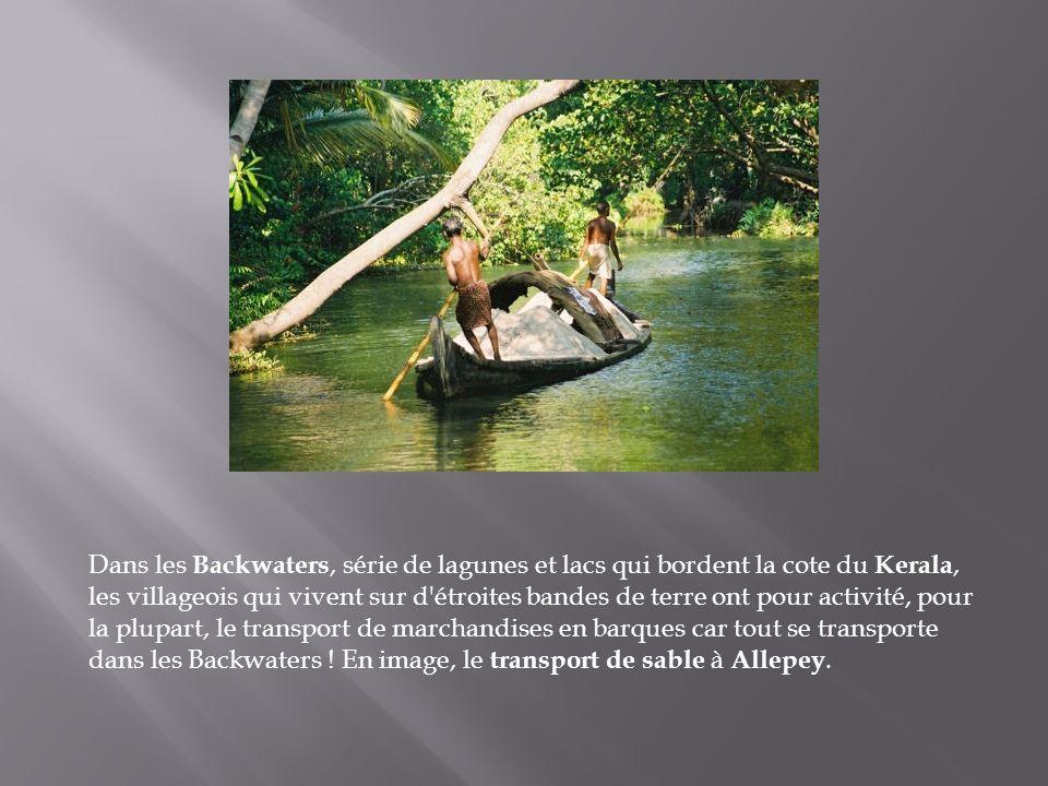 Dans les Backwaters, série de lagunes et lacs qui bordent la cote du Kerala, les villageois qui vivent sur d étroites bandes de terre ont pour activité, pour la plupart, le transport de marchandises en barques car tout se transporte dans les Backwaters .