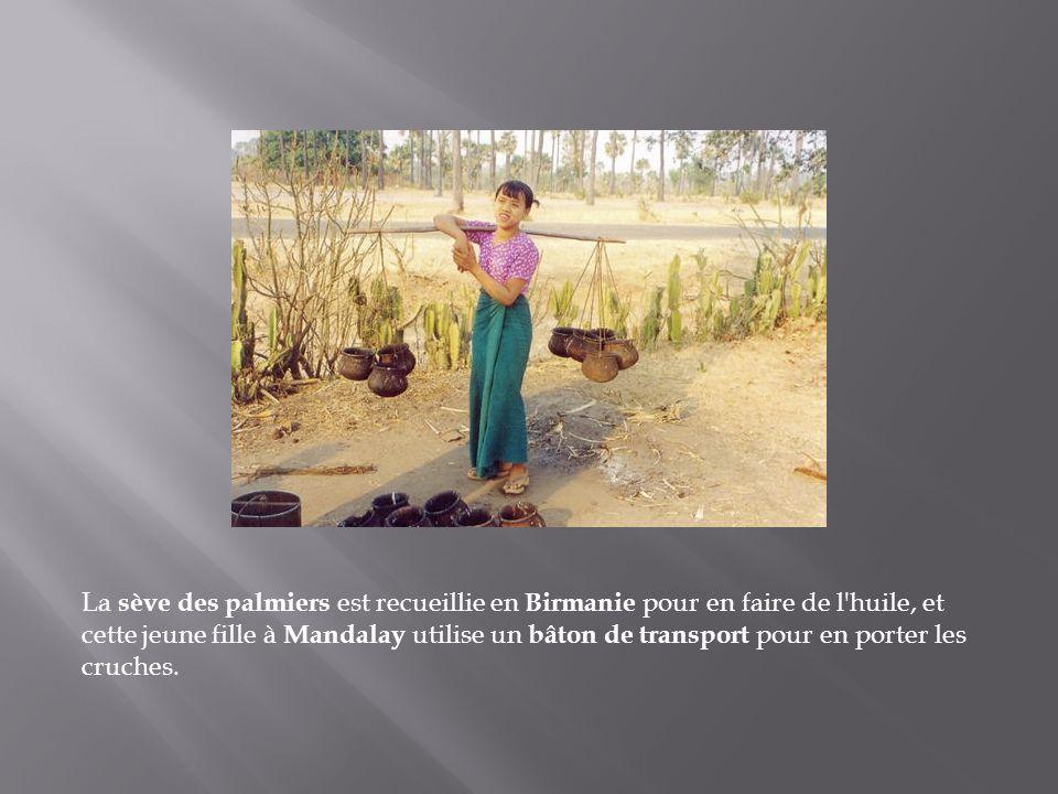 La sève des palmiers est recueillie en Birmanie pour en faire de l huile, et cette jeune fille à Mandalay utilise un bâton de transport pour en porter les cruches.