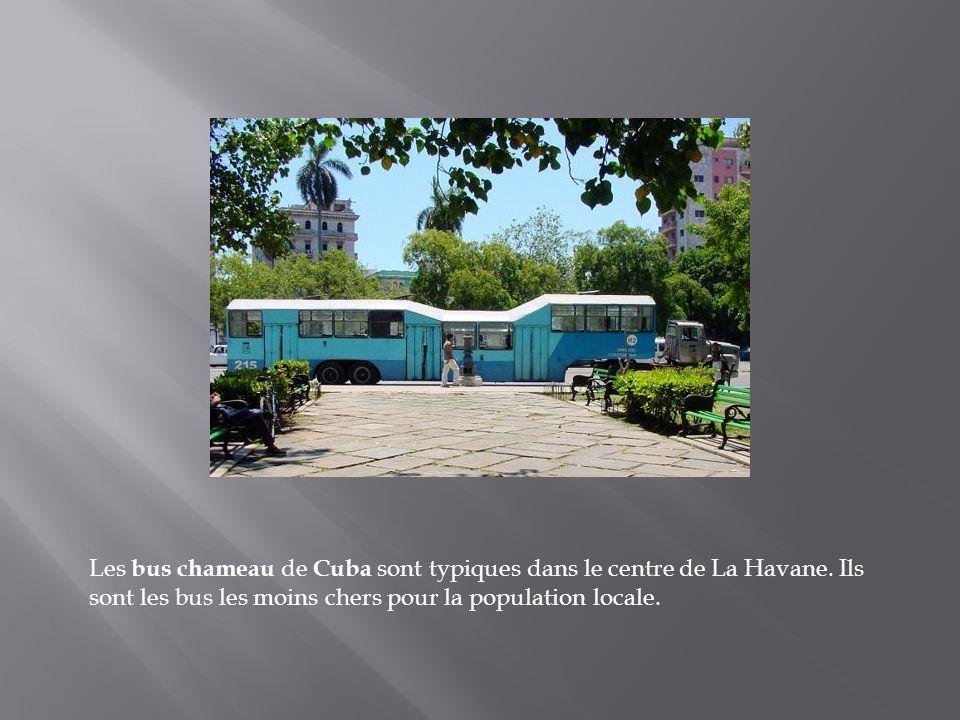 Les bus chameau de Cuba sont typiques dans le centre de La Havane