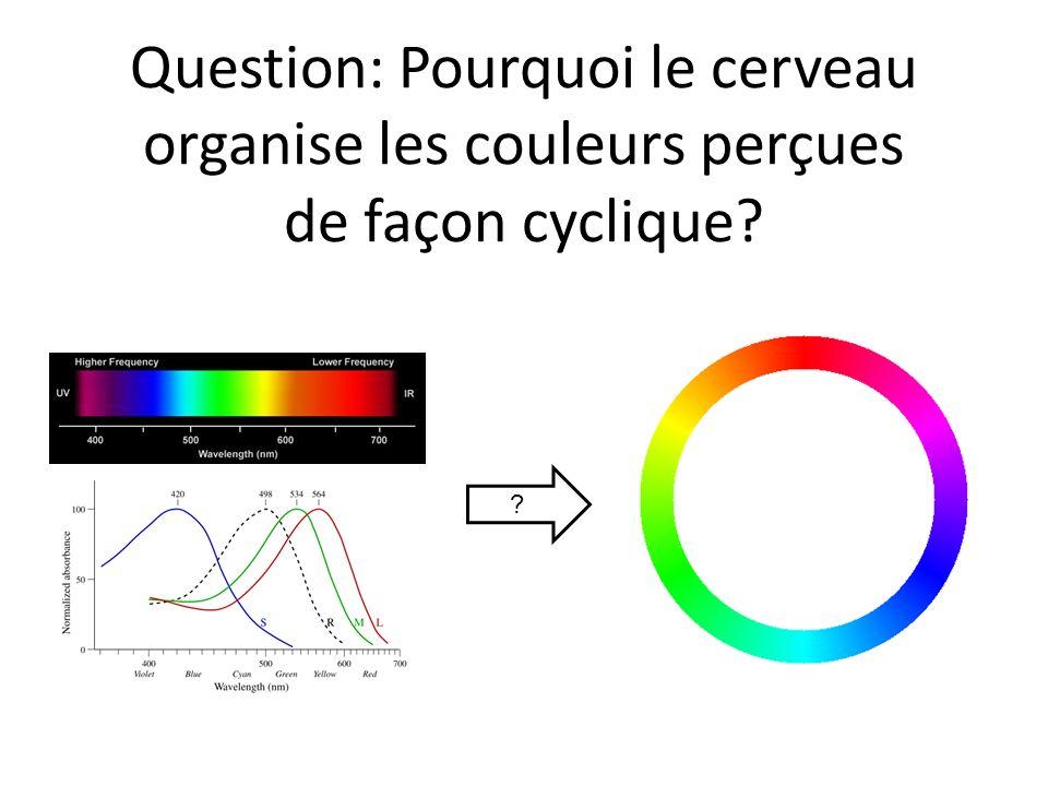 Question: Pourquoi le cerveau organise les couleurs perçues de façon cyclique