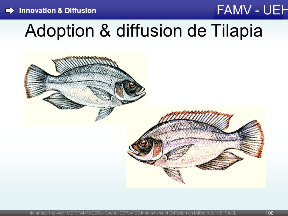 Adoption & diffusion de Tilapia