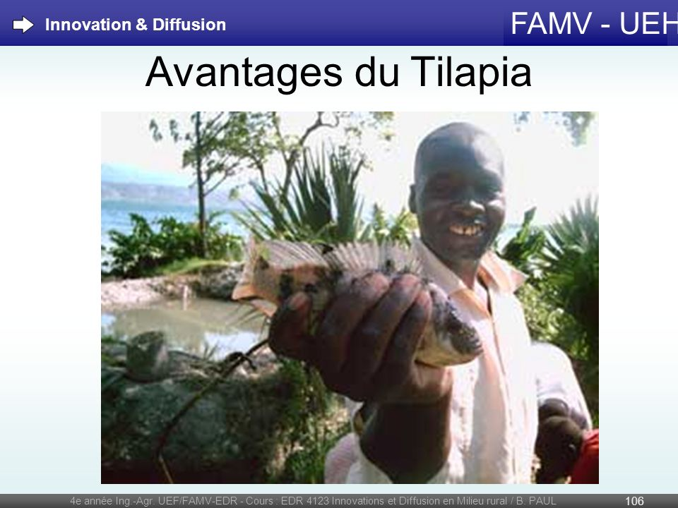 Avantages du Tilapia Innovation & Diffusion