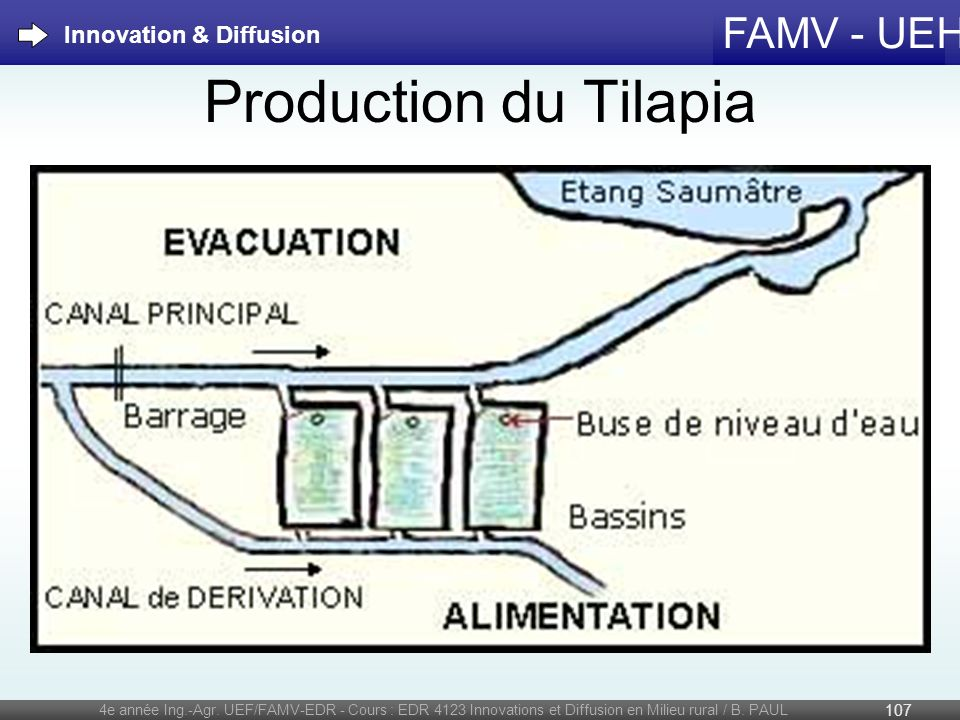 Production du Tilapia Innovation & Diffusion