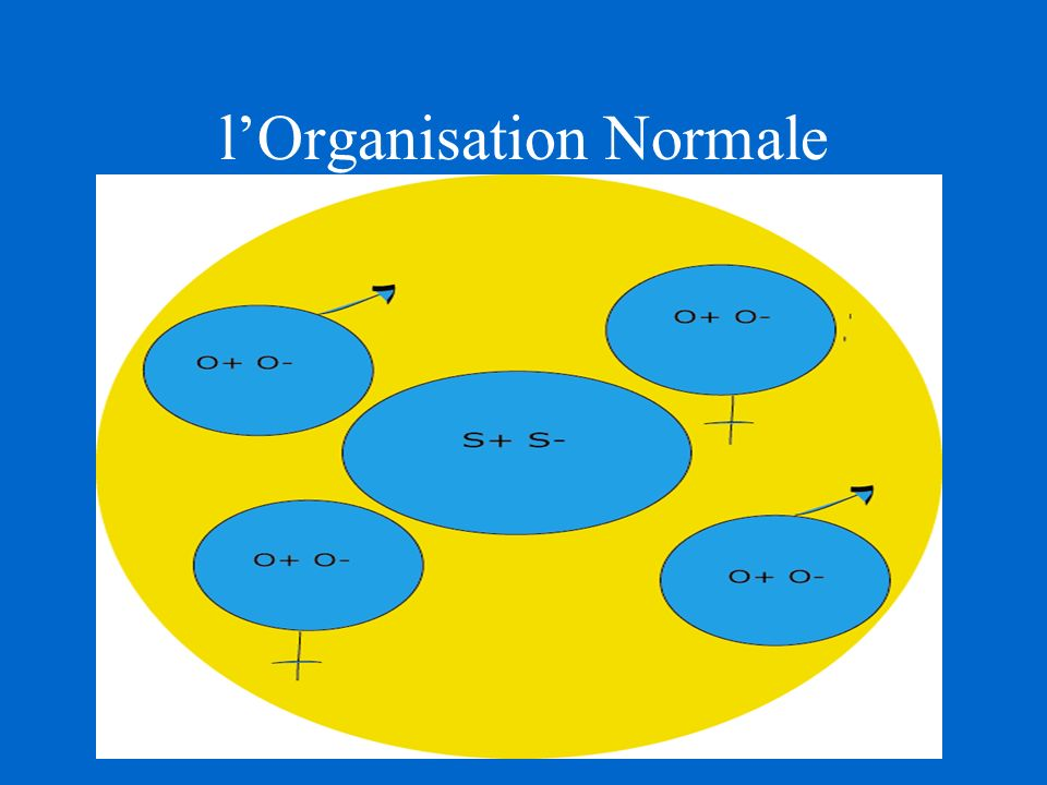 l'Organisation Normale