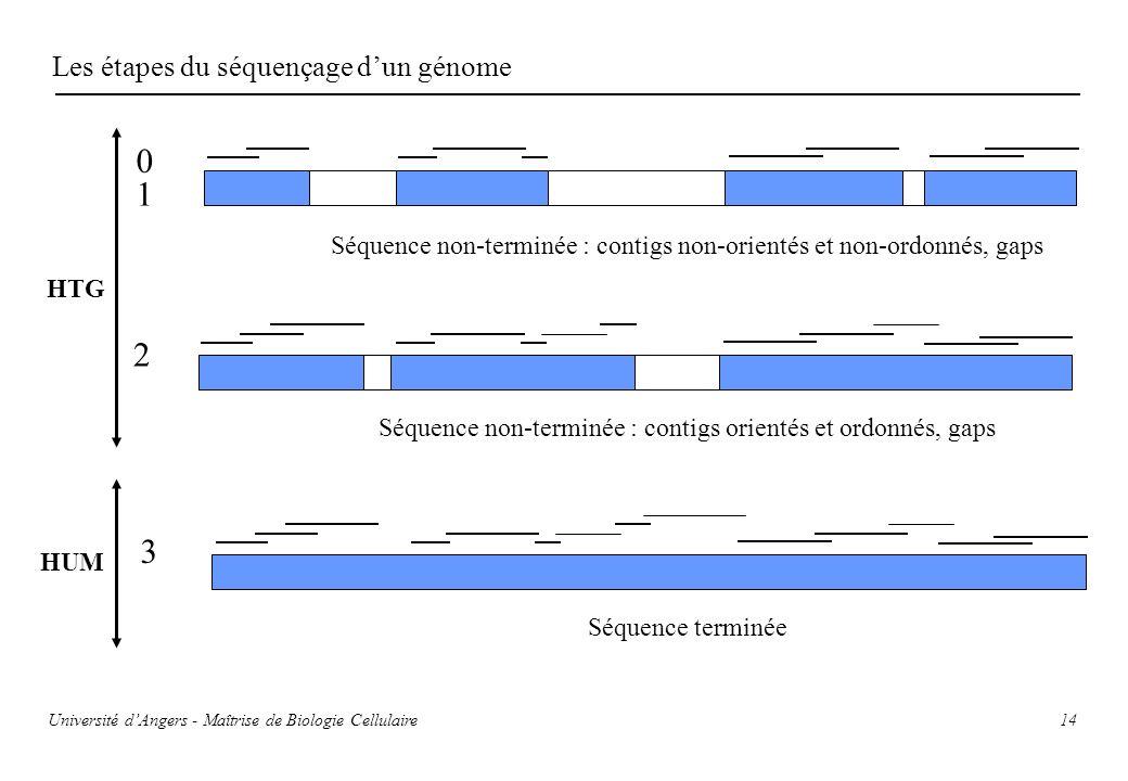 1 2 3 Les étapes du séquençage d'un génome