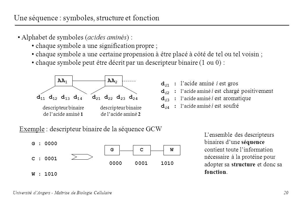 Une séquence : symboles, structure et fonction