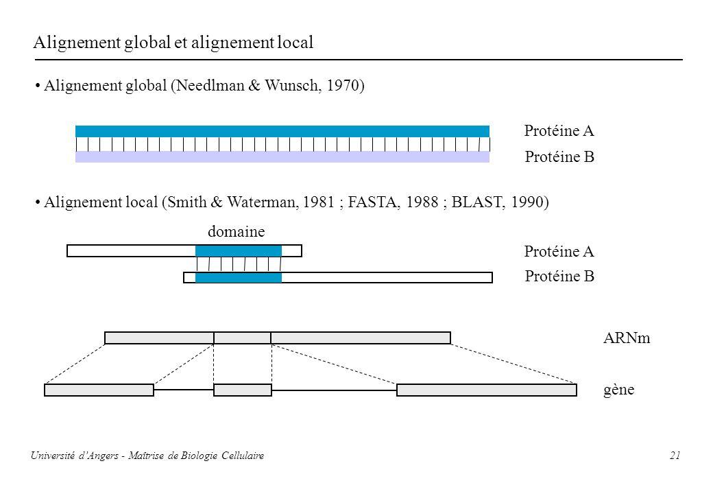 Alignement global et alignement local