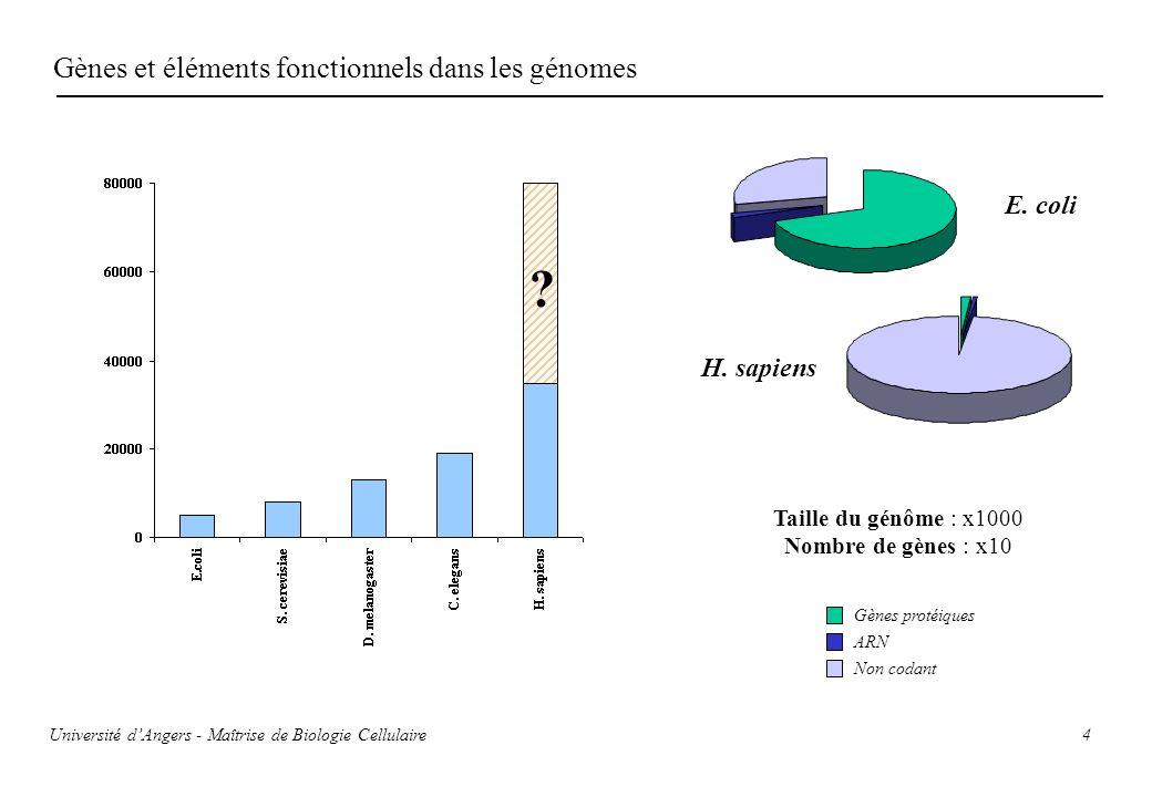 Gènes et éléments fonctionnels dans les génomes E. coli H. sapiens