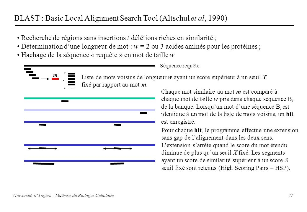 BLAST : Basic Local Alignment Search Tool (Altschul et al, 1990)