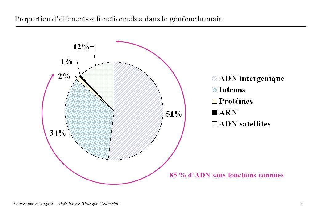 Proportion d'éléments « fonctionnels » dans le génôme humain