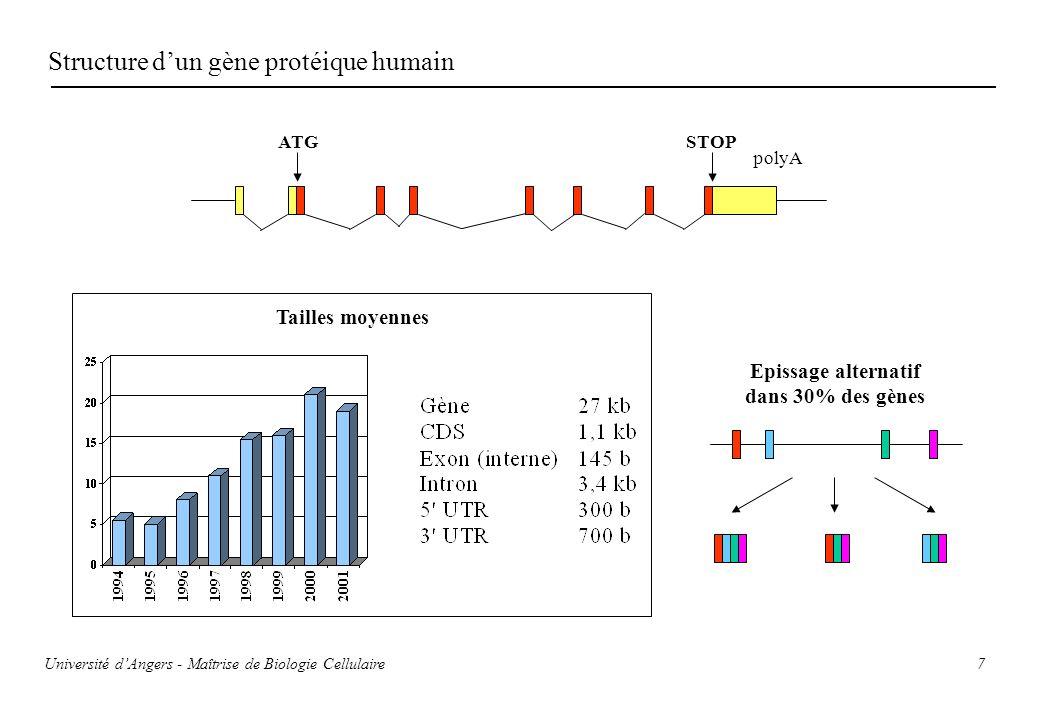 Structure d'un gène protéique humain