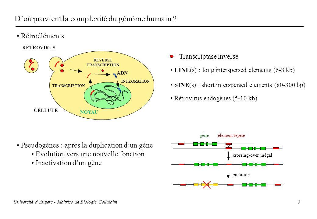 D'où provient la complexité du génôme humain