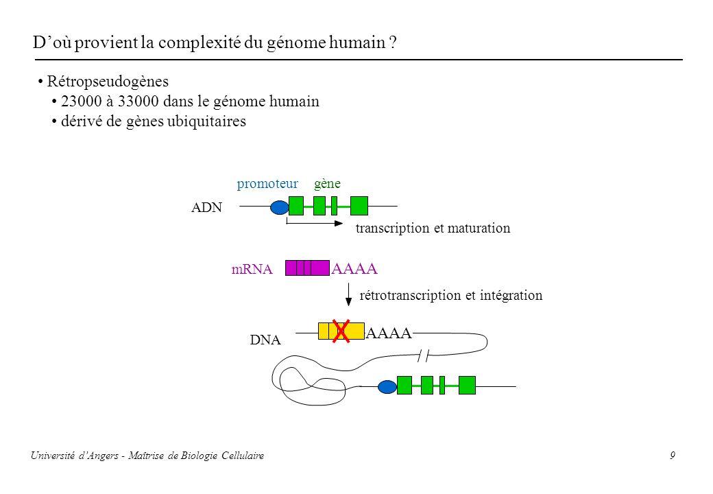 D'où provient la complexité du génome humain