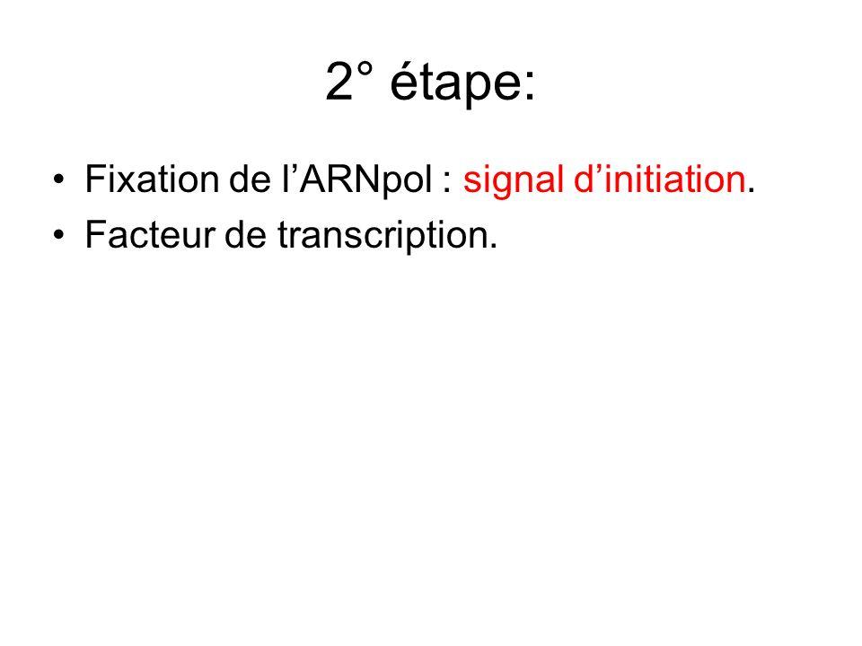 2° étape: Fixation de l'ARNpol : signal d'initiation.
