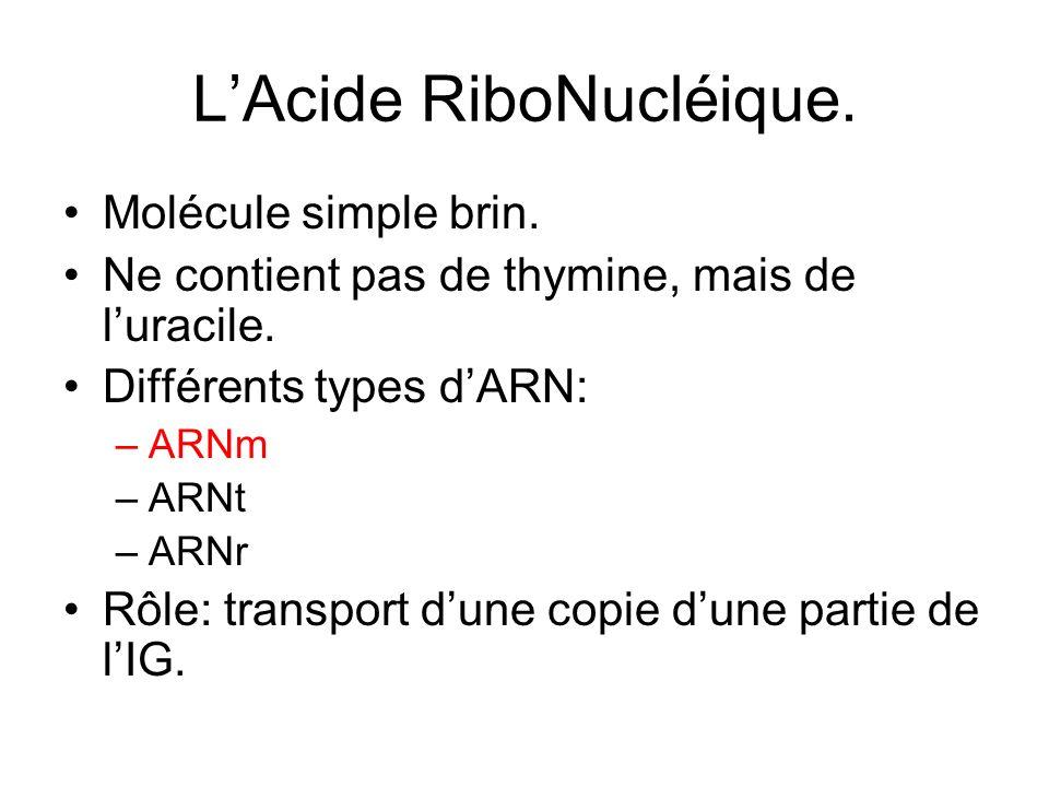 L'Acide RiboNucléique.