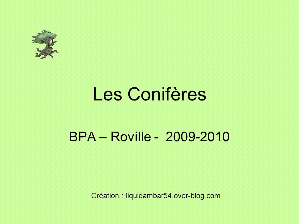 Les Conifères BPA – Roville - 2009-2010