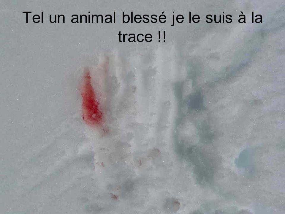 Tel un animal blessé je le suis à la trace !!