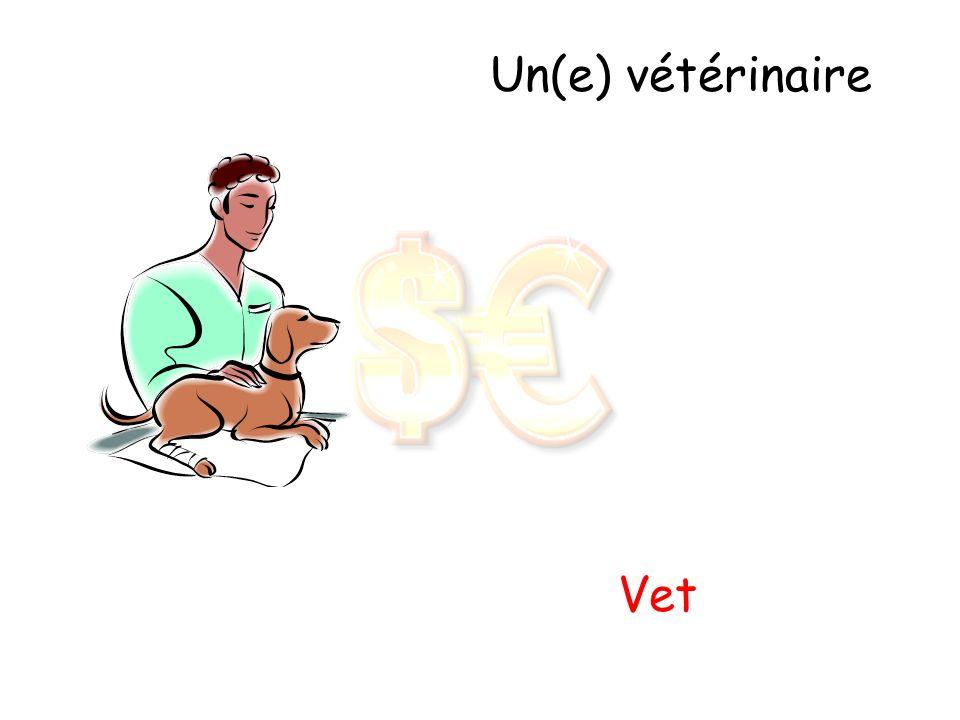 Un(e) vétérinaire Vet