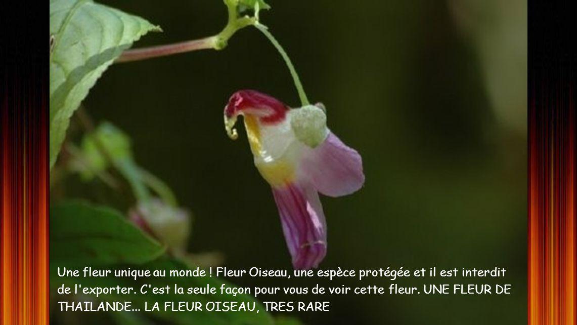 Une fleur unique au monde