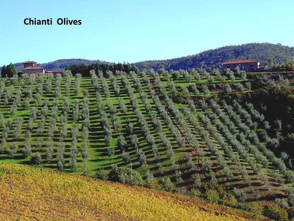 Chianti Olives