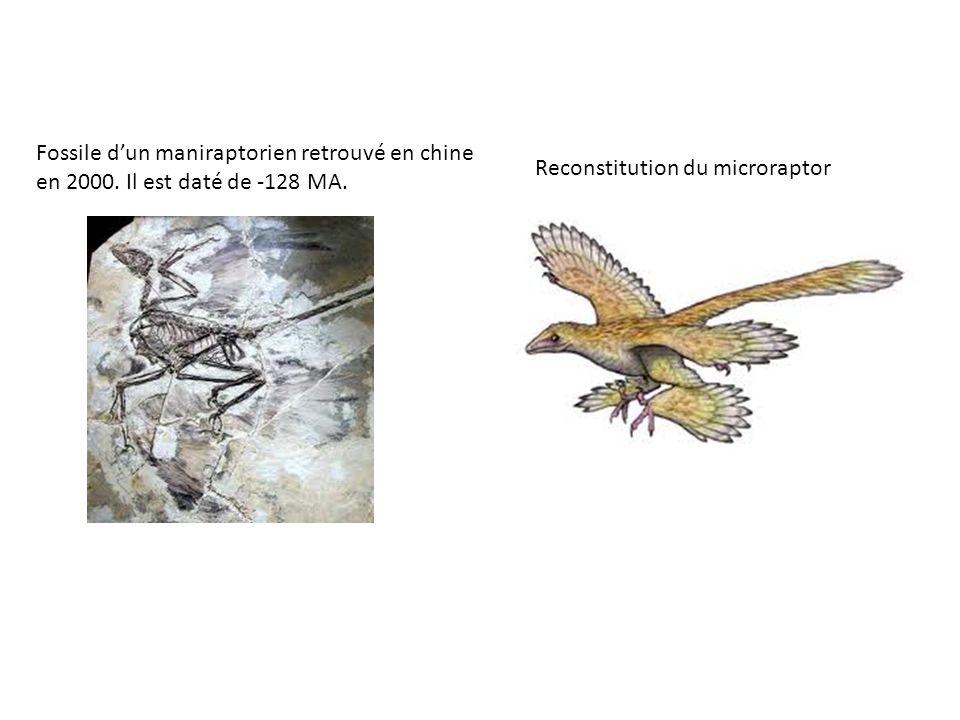 Fossile d'un maniraptorien retrouvé en chine en 2000