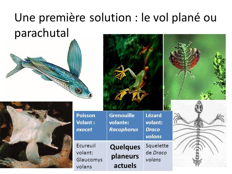 Une première solution : le vol plané ou parachutal