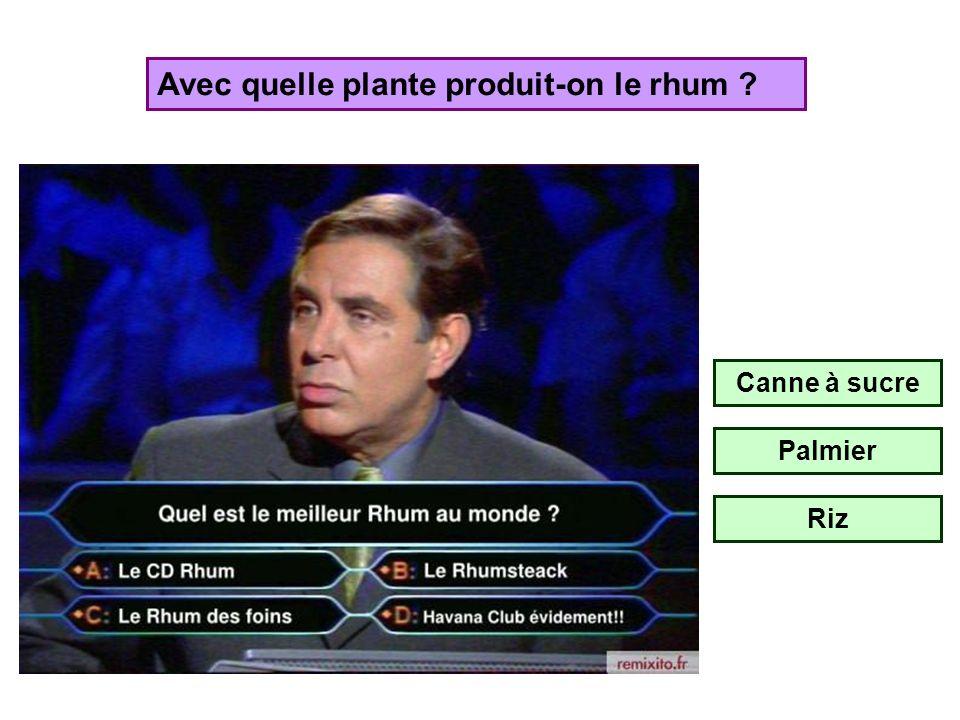 Avec quelle plante produit-on le rhum