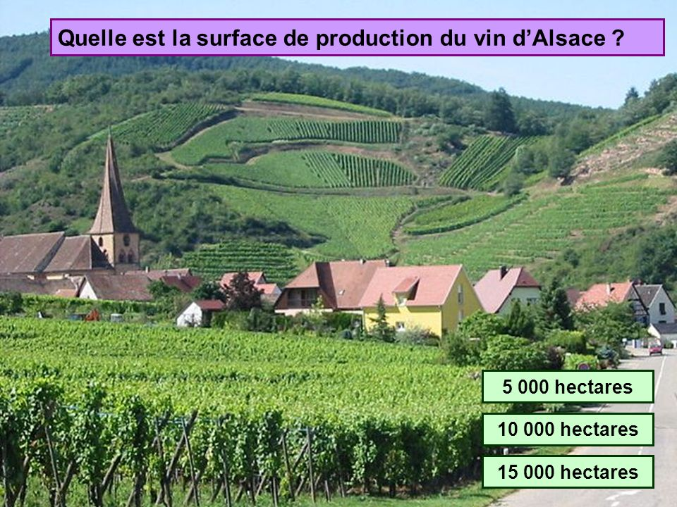 Quelle est la surface de production du vin d'Alsace