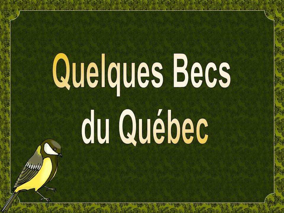 Quelques Becs du Québec