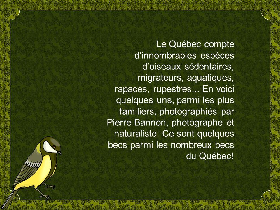 Le Québec compte d'innombrables espèces d'oiseaux sédentaires, migrateurs, aquatiques, rapaces, rupestres...