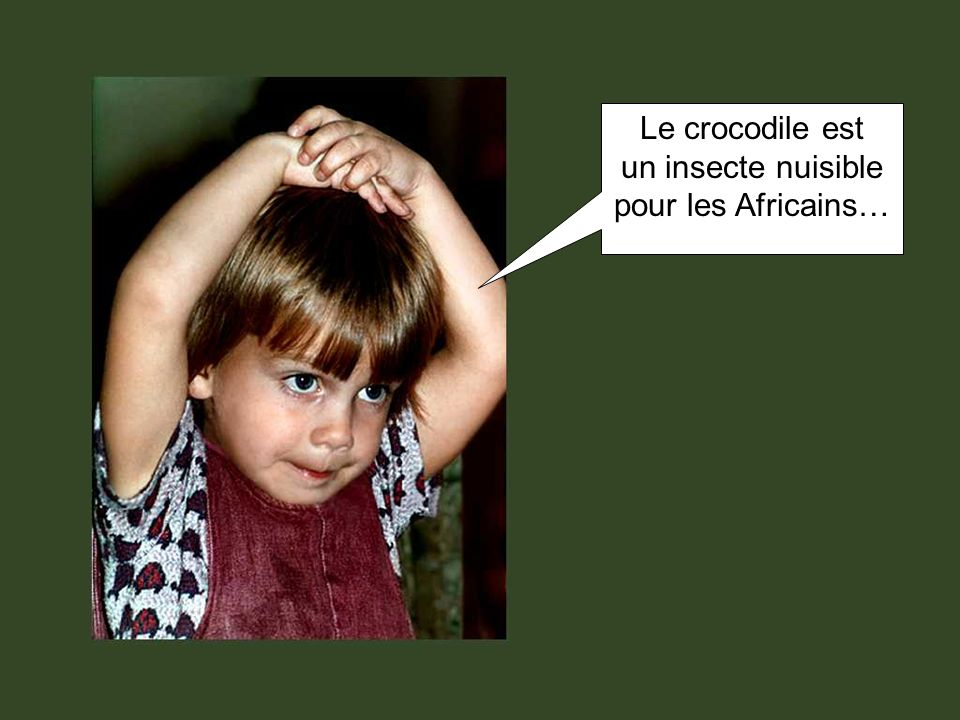 Le crocodile est un insecte nuisible pour les Africains…