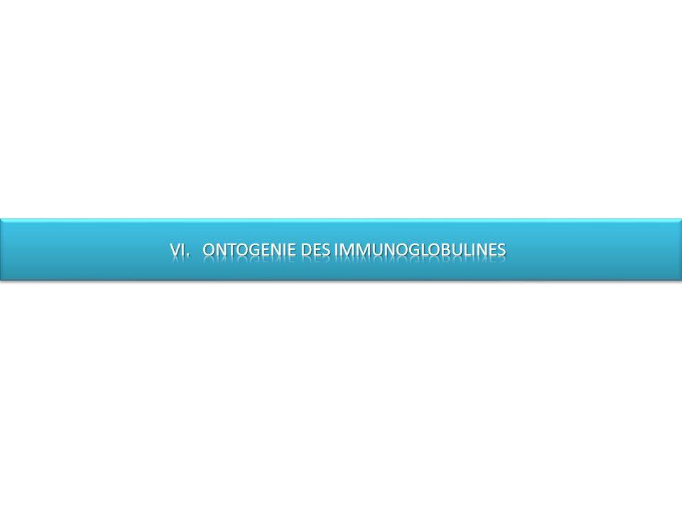 VI. ONTOGENIE DES IMMUNOGLOBULINES