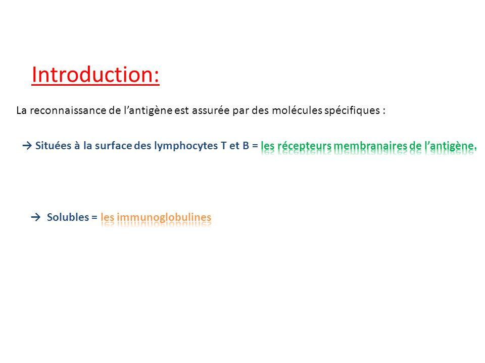 Introduction: La reconnaissance de l'antigène est assurée par des molécules spécifiques :