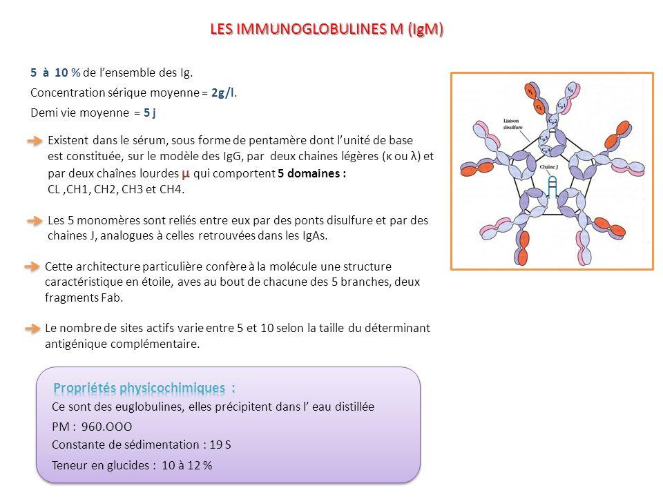 LES IMMUNOGLOBULINES M (IgM)
