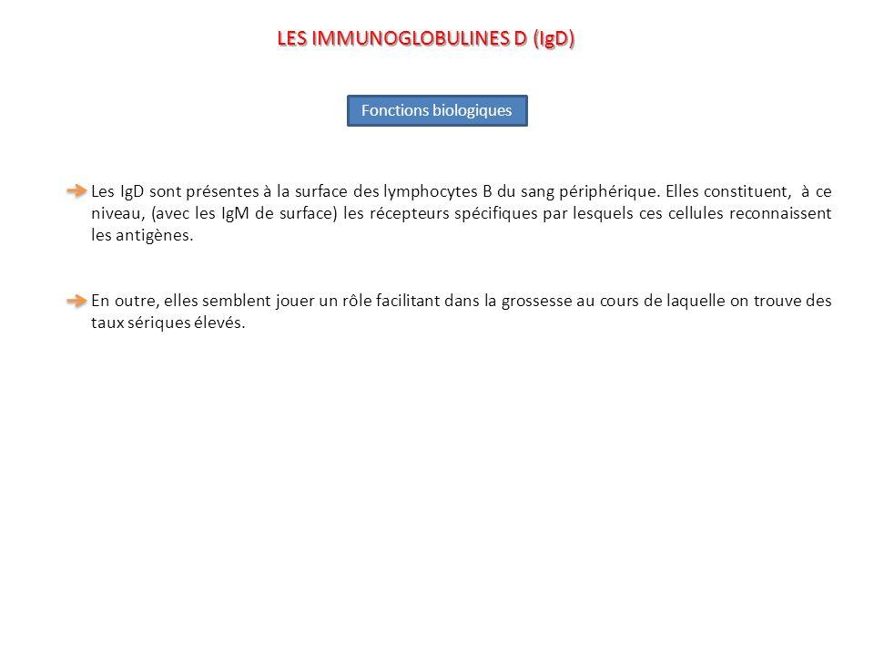 LES IMMUNOGLOBULINES D (IgD)