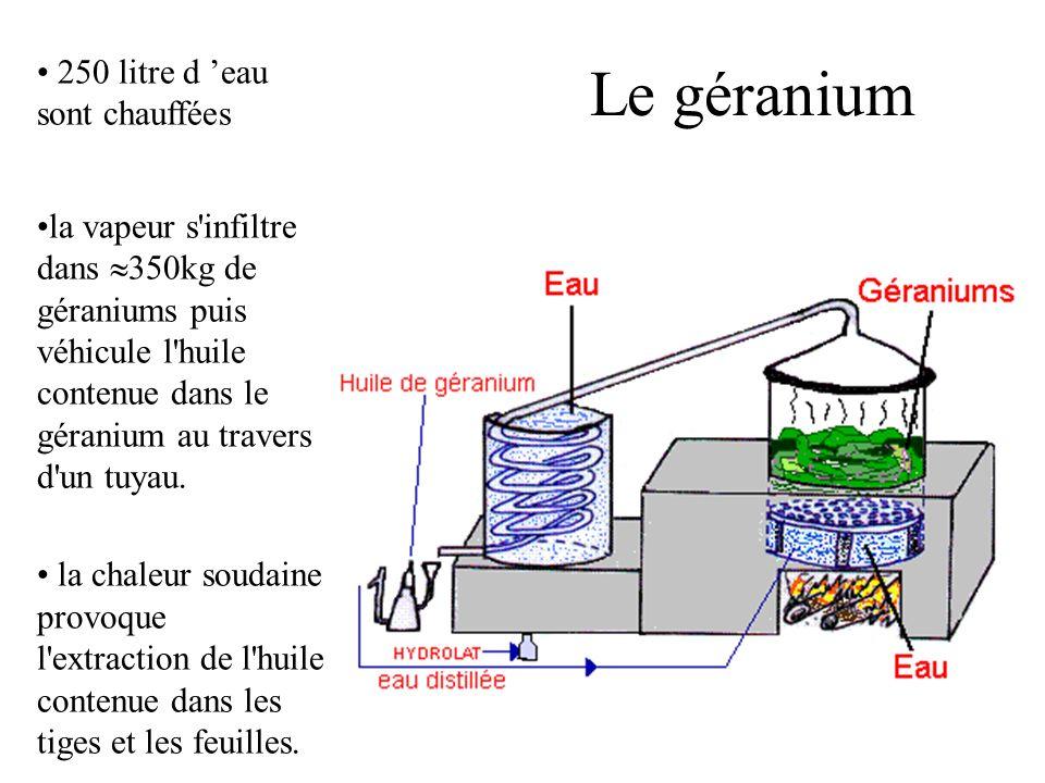 Le géranium 250 litre d 'eau sont chauffées