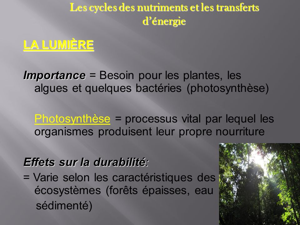 Les cycles des nutriments et les transferts d'énergie