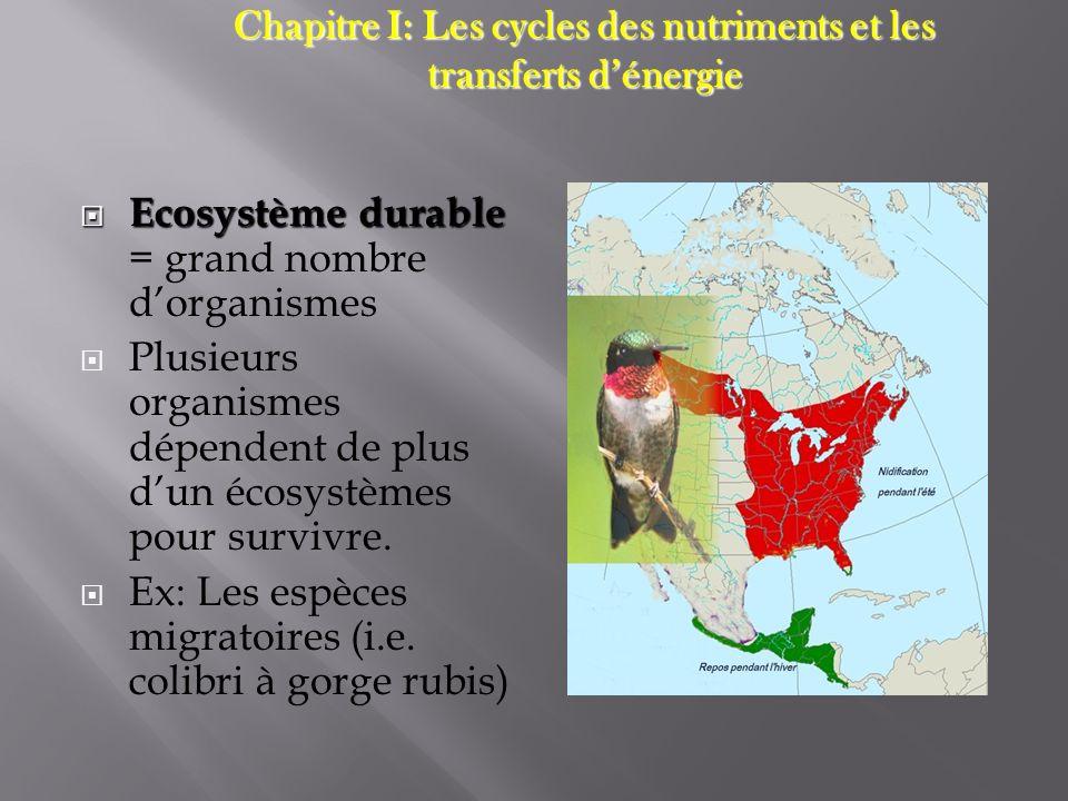 Chapitre I: Les cycles des nutriments et les transferts d'énergie