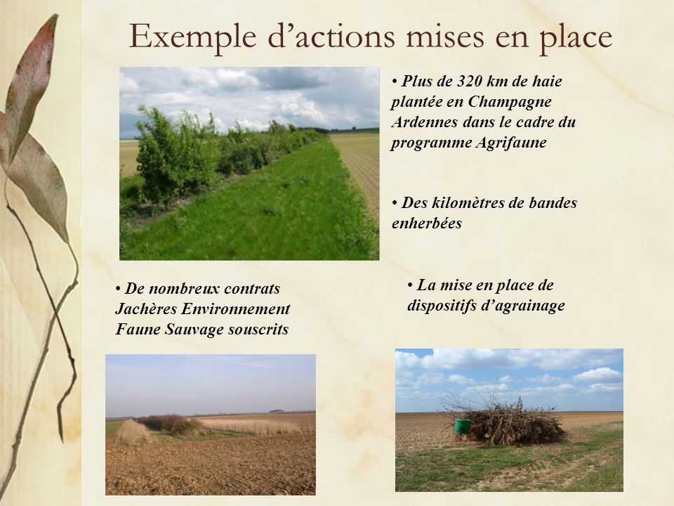 Exemple d'actions mises en place