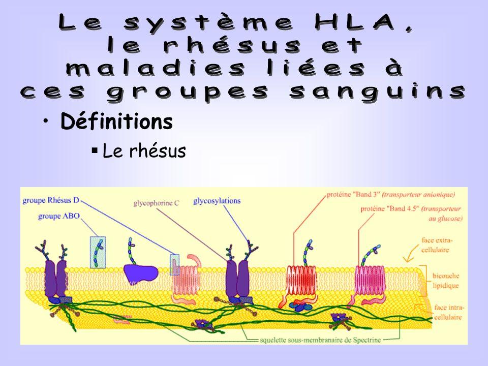 Le système HLA, le rhésus et maladies liées à ces groupes sanguins
