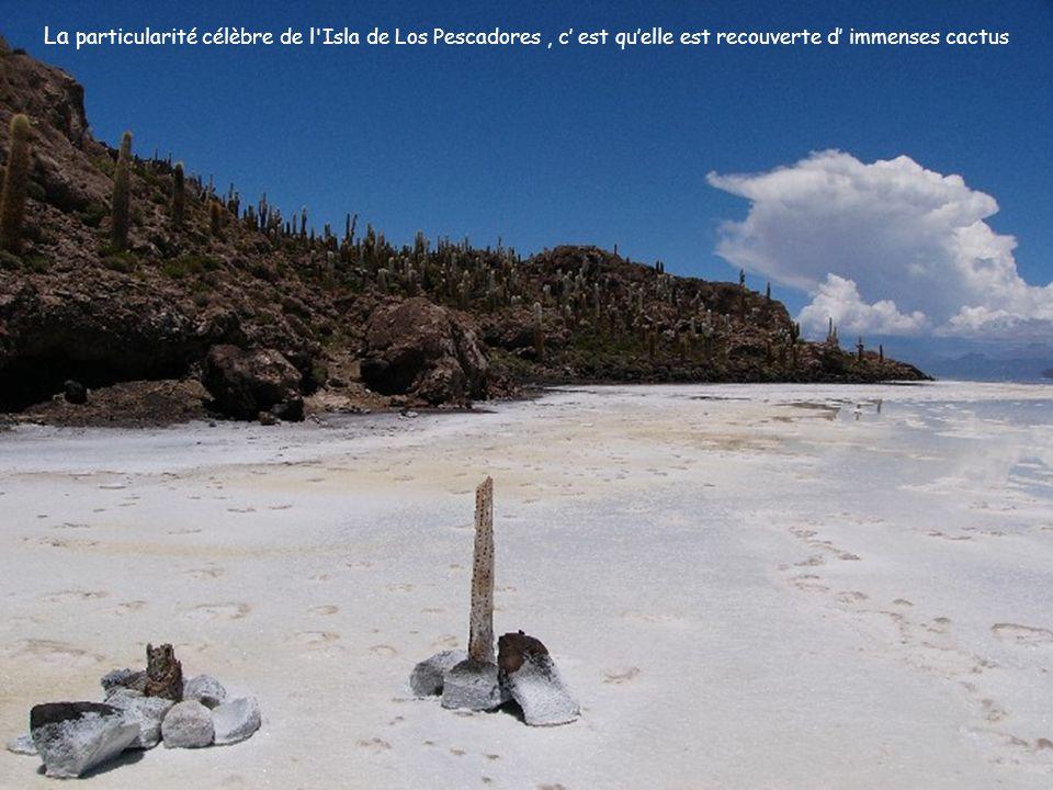 La particularité célèbre de l Isla de Los Pescadores , c' est qu'elle est recouverte d' immenses cactus