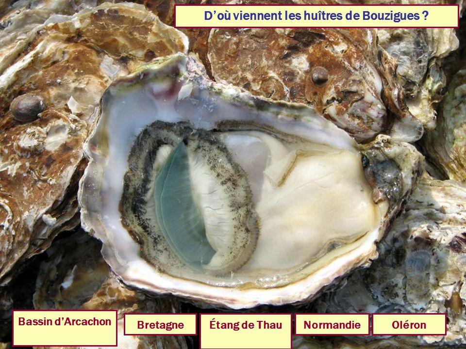 D'où viennent les huîtres de Bouzigues