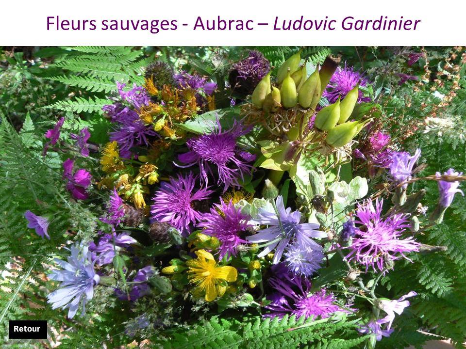 Fleurs sauvages - Aubrac – Ludovic Gardinier