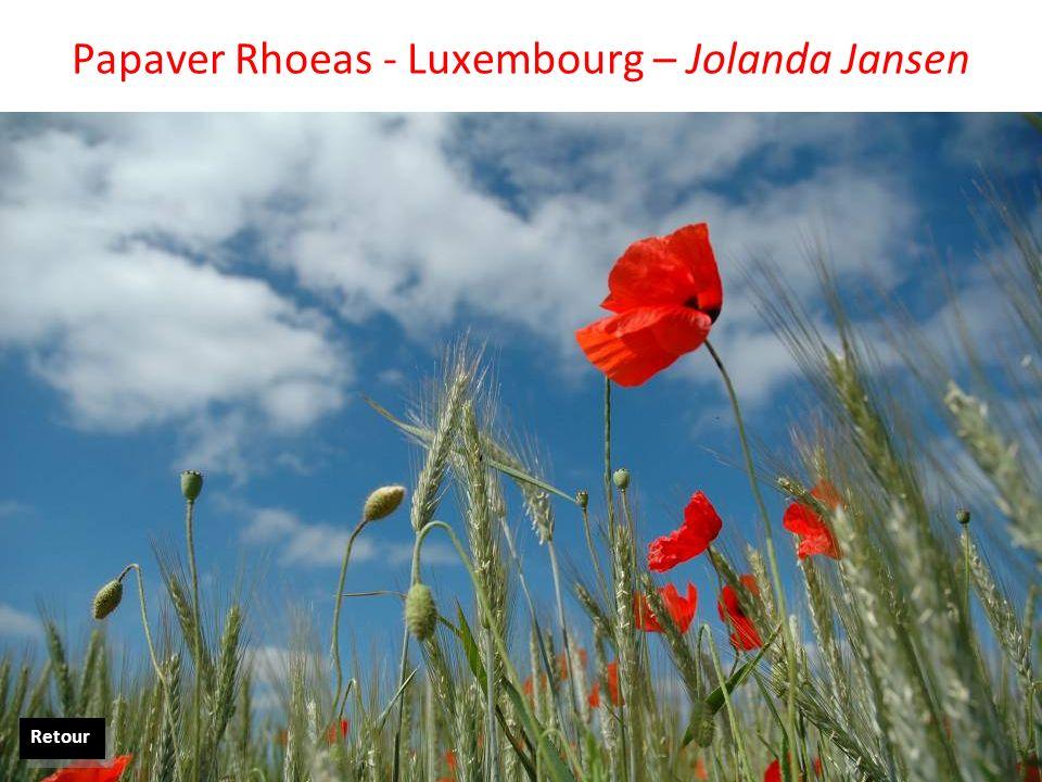 Papaver Rhoeas - Luxembourg – Jolanda Jansen