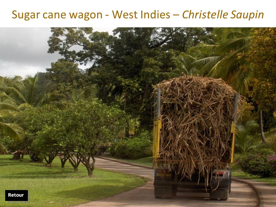 Sugar cane wagon - West Indies – Christelle Saupin